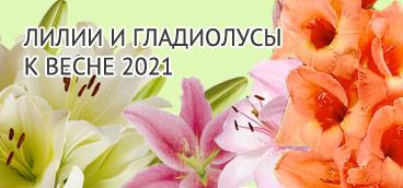 Заказать лилии и гладиолусы к весне 2021.