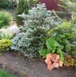Садовые растения. Практические замечания
