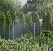Уход за растениями в сухую погоду
