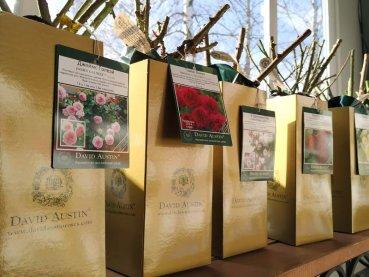 Розы Дэвида Остина в подарок к 8 Марта.