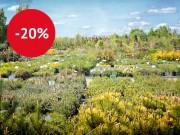 20%-ная скидка на весь ассортимент растений