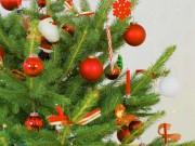 Спешите выбрать новогоднюю красавицу к праздникам!