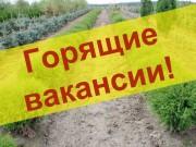 Требуются работники в сфере озеленения