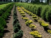 Растения для белорусских садов