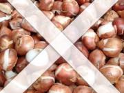 Нет в продаже луковиц для осенней посадки