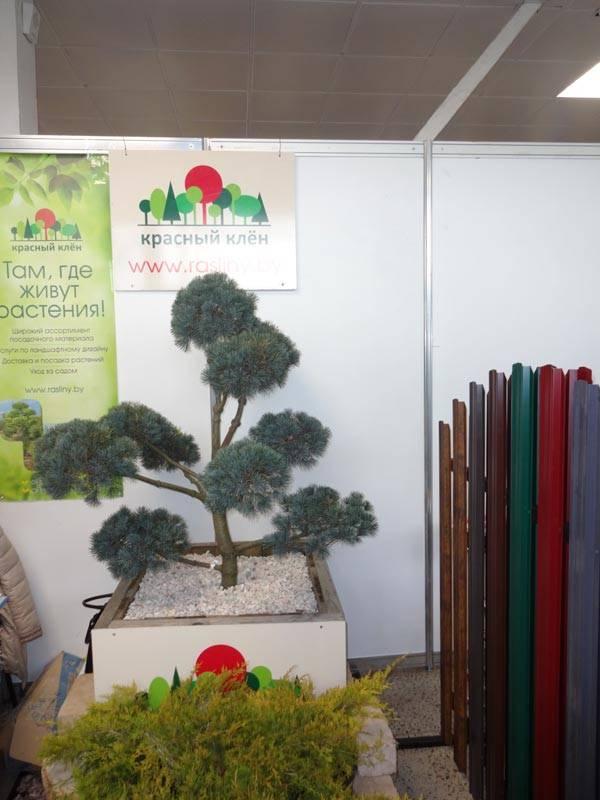 Выставка Деревянное домостроение 8
