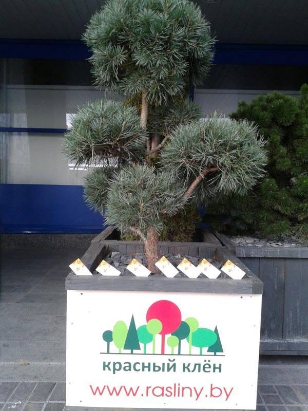 Выставка Деревянное домостроение