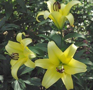 Yelloween (OT)