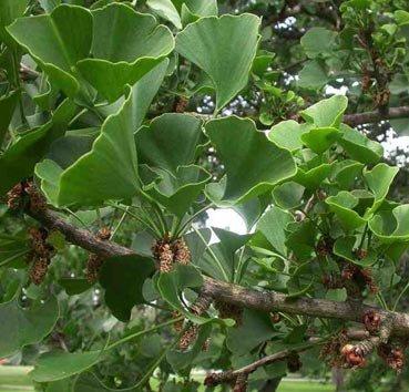 каталог деревьев с фото